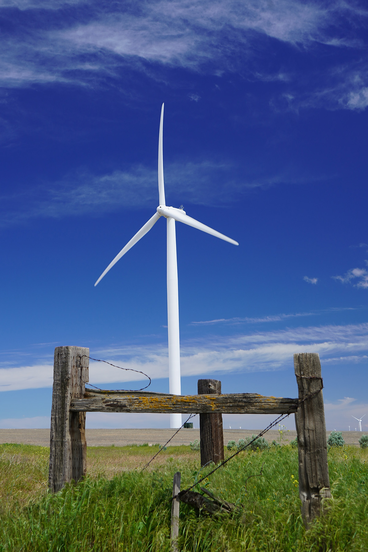 Wind turbine in a field